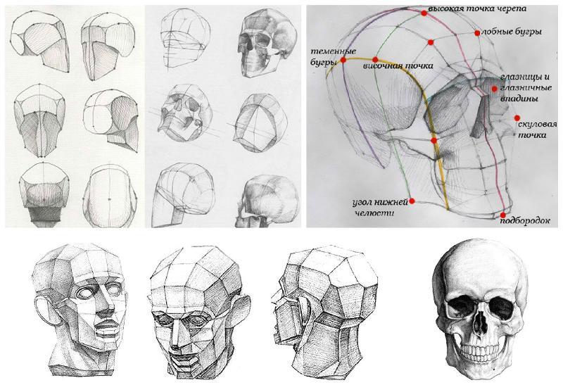 Как правильно рисовать череп человека