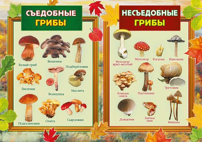 картинки съедобных грибов и несъедобных грибов