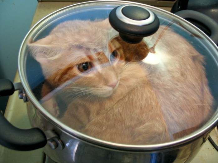Что готовить кошке в домашних условиях