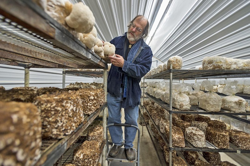Предприятия по выращиванию грибов в 223