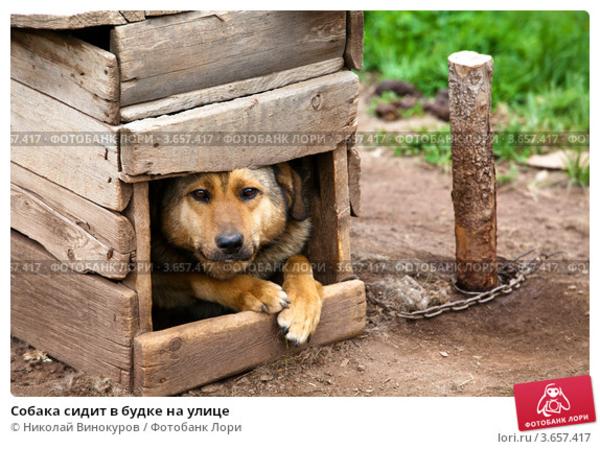 Почему собака не спит в будке зимой