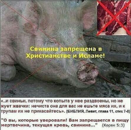 Легенда почему мусульмане не едят свинину