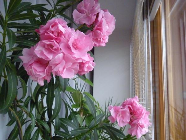 Почему пропадают в комнате цветы