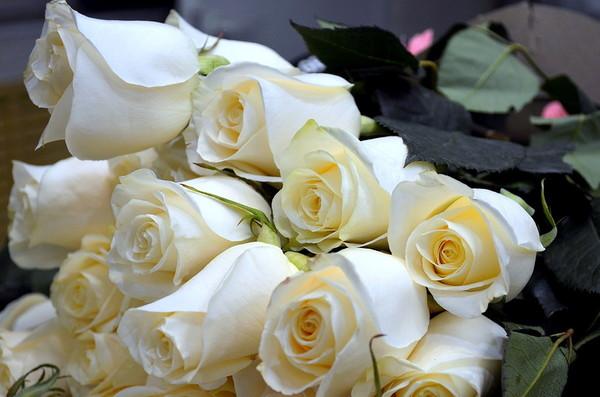 Поздравление в белым розами