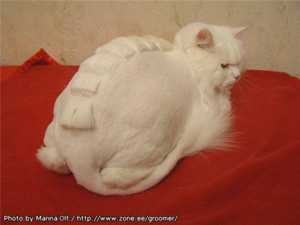 Стрижка кошки своими руками 93