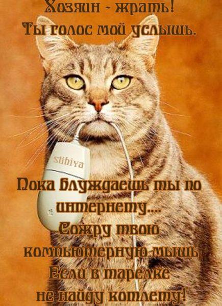 Прикольные стихи к подарку кошка 90