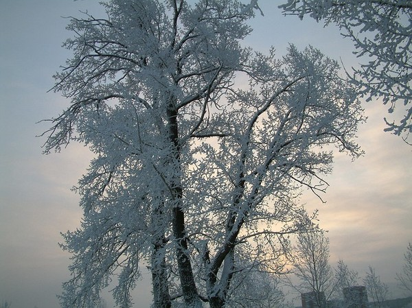 Почему зимой енисей не замерзает