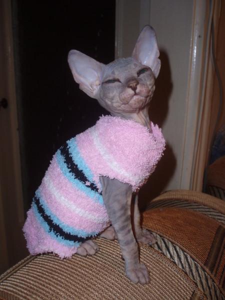 Сшить одежду для котенка своими руками фото