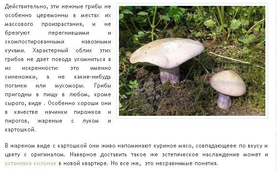 318Как готовить синеножка гриб