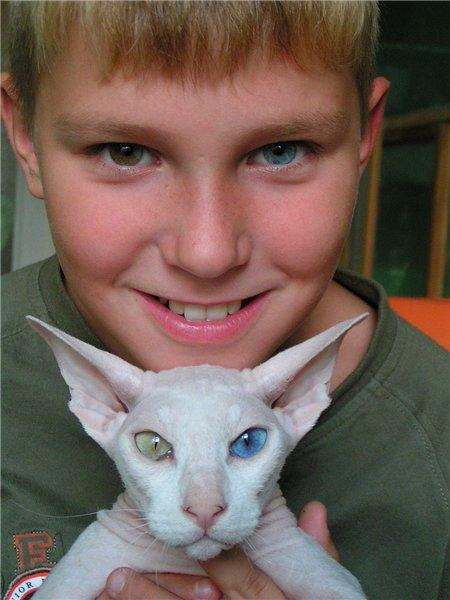 фото нашел кота