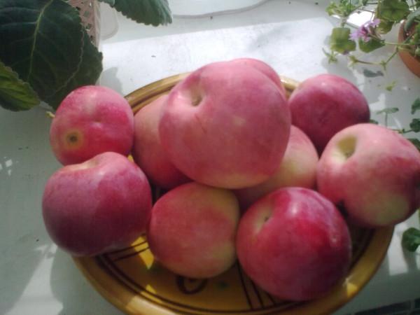 Помогите определить сорт яблок есть 2