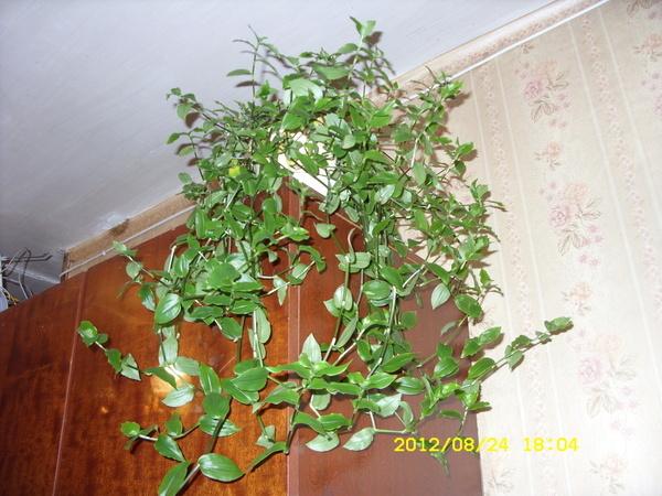 Какой цветок можно вырастить в домашних условиях