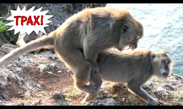 Сексуальные отношения человека с обезьянами видео статью