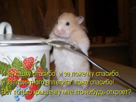 http://otvet.imgsmail.ru/download/93b8a342382b9770eb6260df06b81340_i-8595.jpg