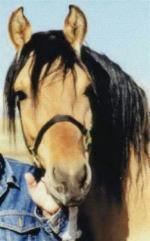Лошадь с которой рисовали спирита