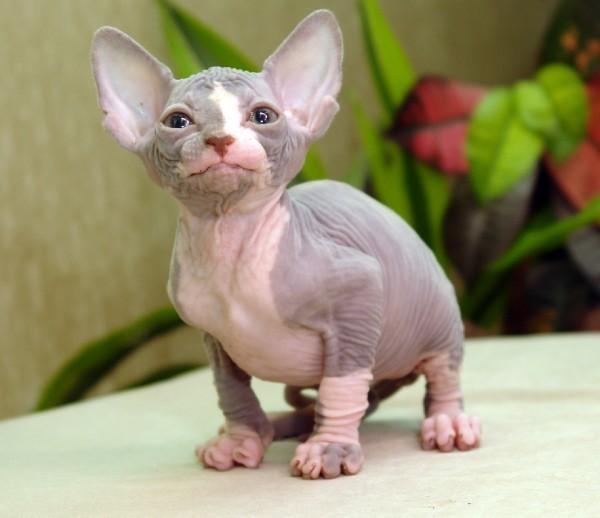 аллергия на кошек можно ли привыкнуть