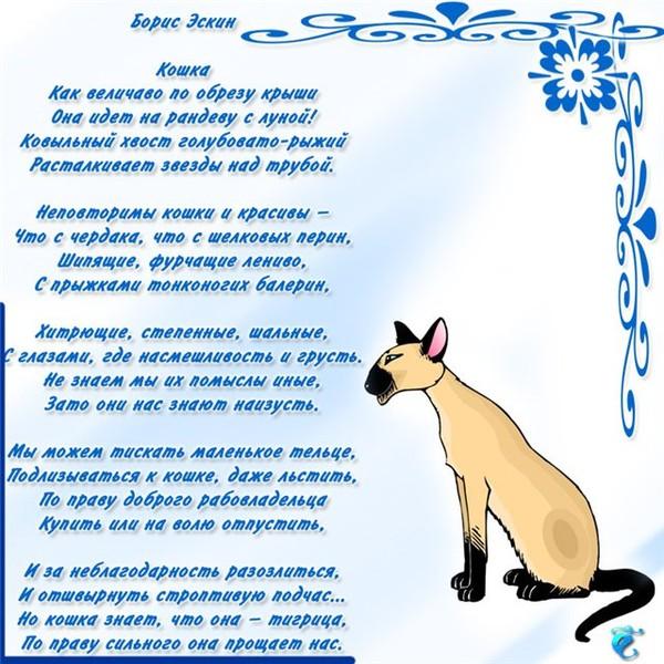 Любительнице кошек поздравления