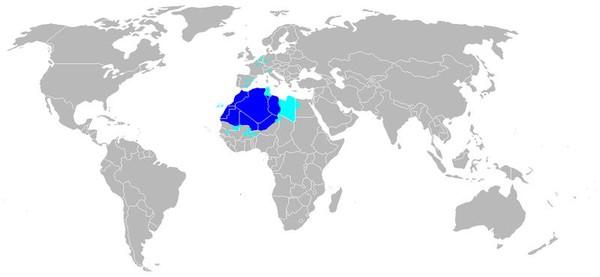 Кто такие арабы и где они живут