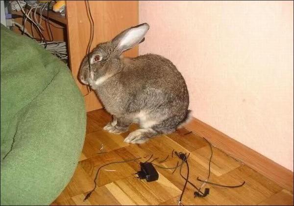 Почему кролики друг друга грызут