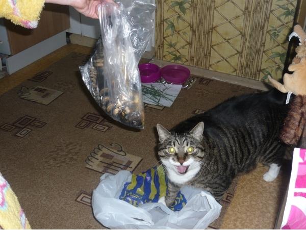 Кота первого в домашних условиях 953