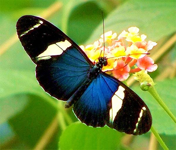 Примеры видообразования, наблюдаемые в природе