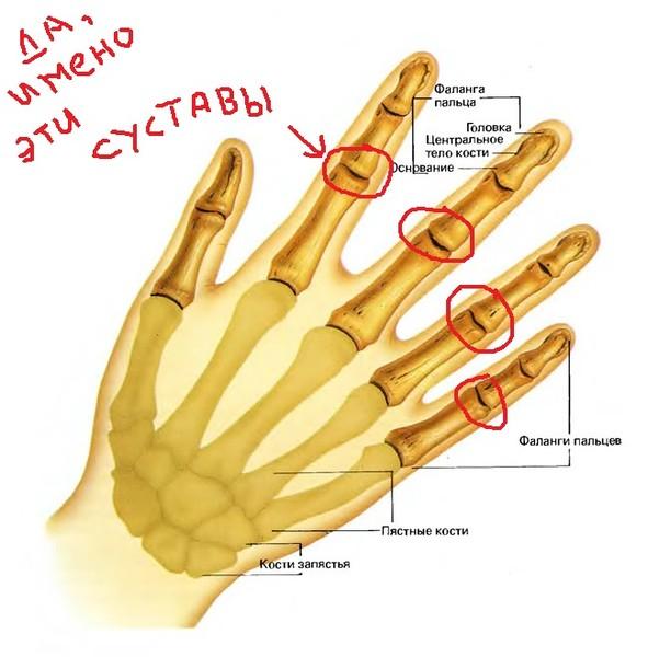 Hand bone joint anatomy