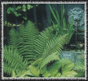 Как именуется растение схожее на папоротник