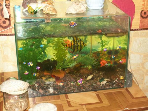 гуппи аквариум: