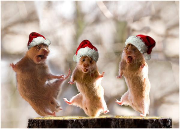 Смешные животные на новый год