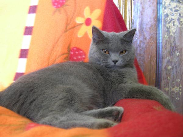 все как определить пушистый будет котенок или нет ноутбука