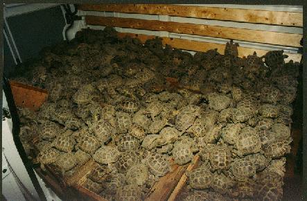 Чем кормить черепашку в домашних условиях - Новости, обзоры, ремонт