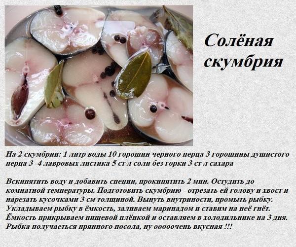 Рецепт солёной скумбрии в домашних условиях