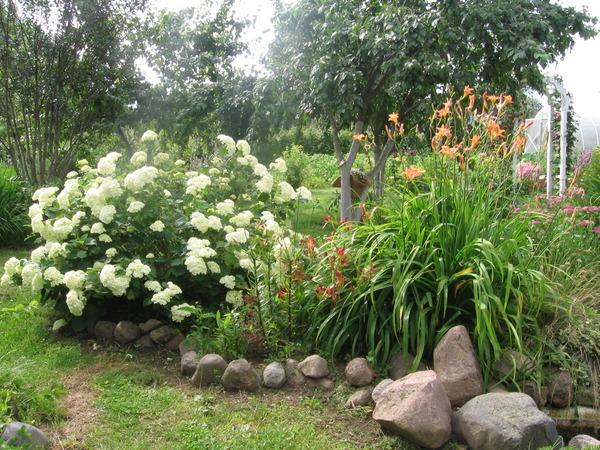 Какие растения можно сажать под деревьями? Несколько советов