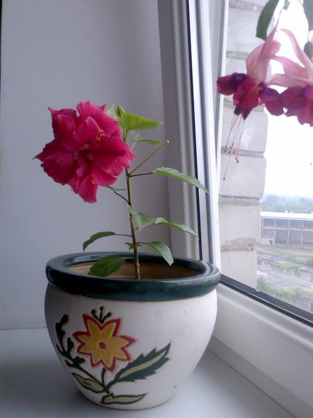 Комнатные цветы тень
