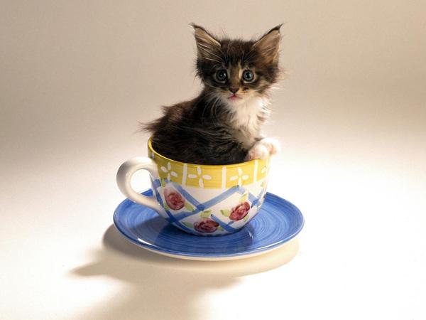 обои на рабочий стол котята прикольные с надписью № 252066 загрузить