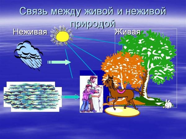 Связь между объектами живой и неживой природой примеры