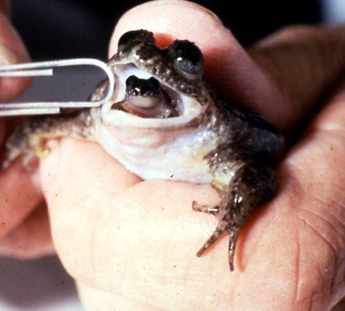 ферментні елементи жаб фото