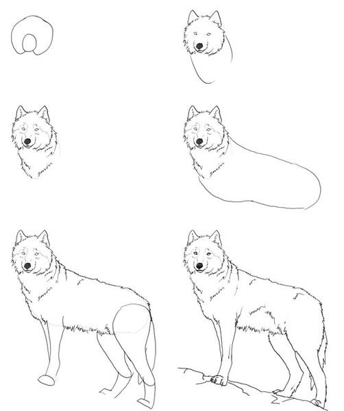 Wolf Zeichnung  Online Zeichnen Lernen  YouTube