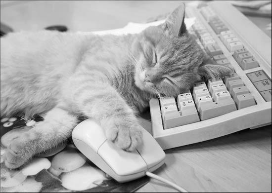 Сон для компьютера