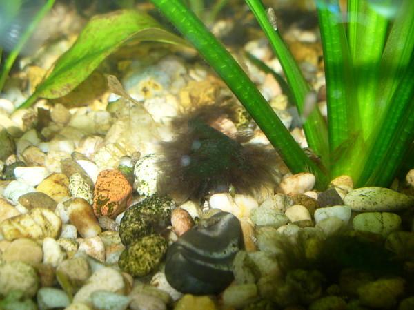 Почему появляются водоросли в аквариуме