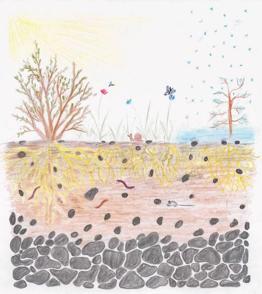 Рисунки с почвой