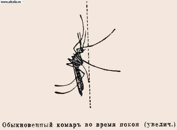 как распознать паразитов в организме человека