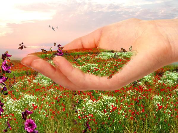 Человек сам как трава как растение солоухин
