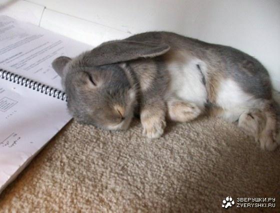 Убил кролика во сне
