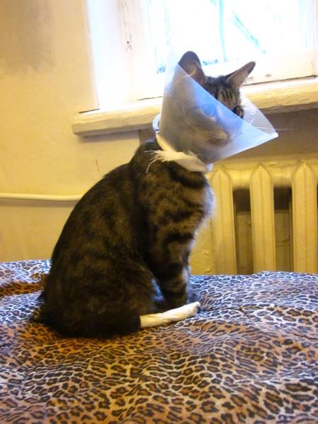 Где купить воротник для кота