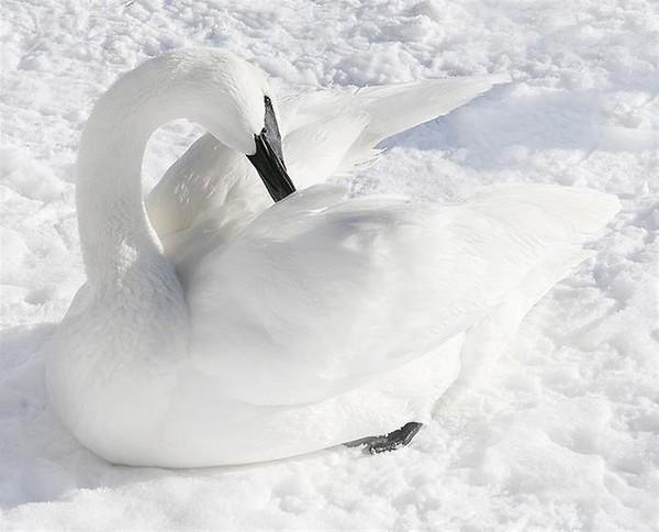 Цвет белого снега фильм - это что такое цвет белого
