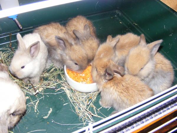 Болезни декоративных кроликами в домашних условиях
