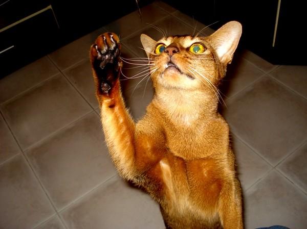 Что сделать в домашних условиях чтобы кошка не просила кота