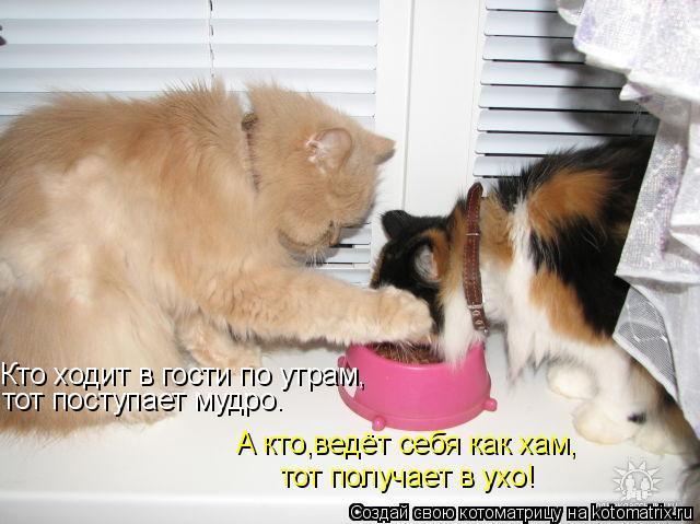 devchonki-prishli-v-gosti