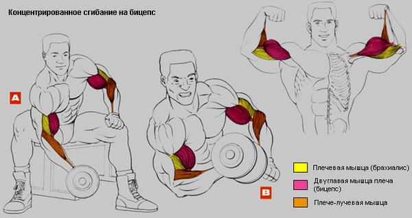 Как накачать мышцы в домашних условиях гантелями